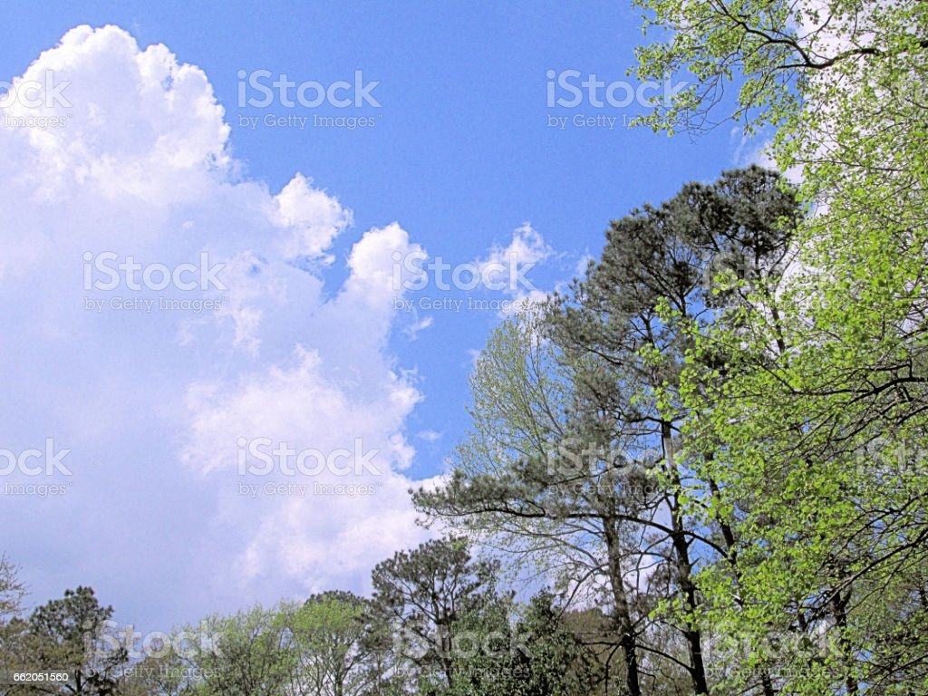 Cloud and trees royalty-free stock photo