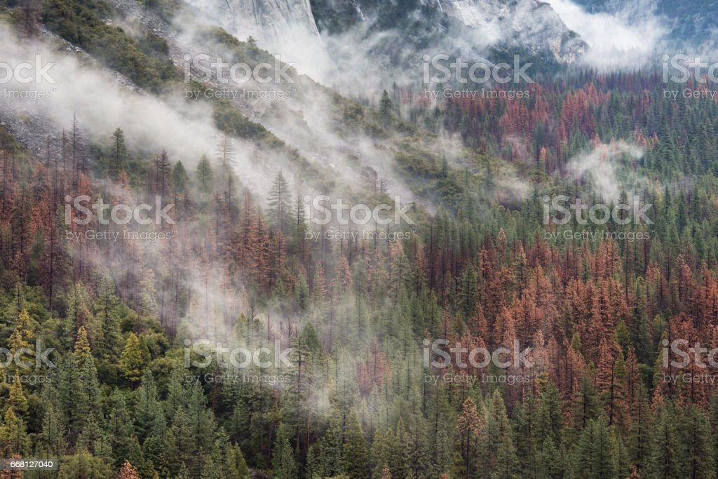 Cloud covered Yosemite National Park's forest stock photo
