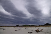 Fingers of heavy cloud hang over a beach on New Zealand's Otago coast in the early morning