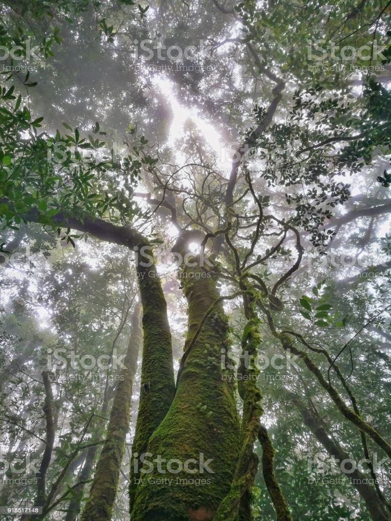 Cloud Forest, Doi Inthanon National Park, Chiang Mai stock photo