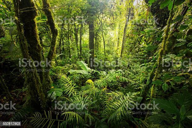 Облако Лес От Костарика — стоковые фотографии и другие картинки 2015