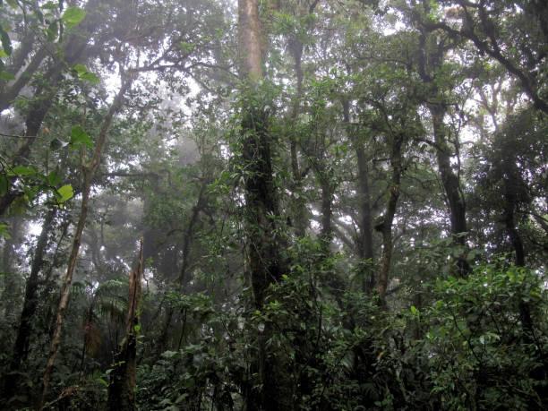 wolke wald der reserva biologica bosque nuboso monteverde, costa rica - regenzeit stock-fotos und bilder