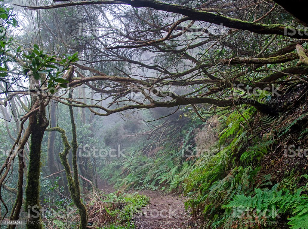 Cloud Forest on Tenerife stock photo