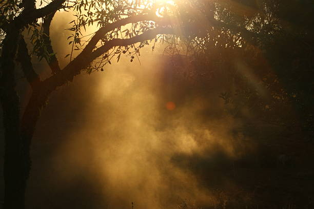 Cloud of dust under the olive tree – Foto