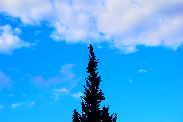 Cloud Pine Tree cloud grafiker stock pictures, royalty-free photos & images