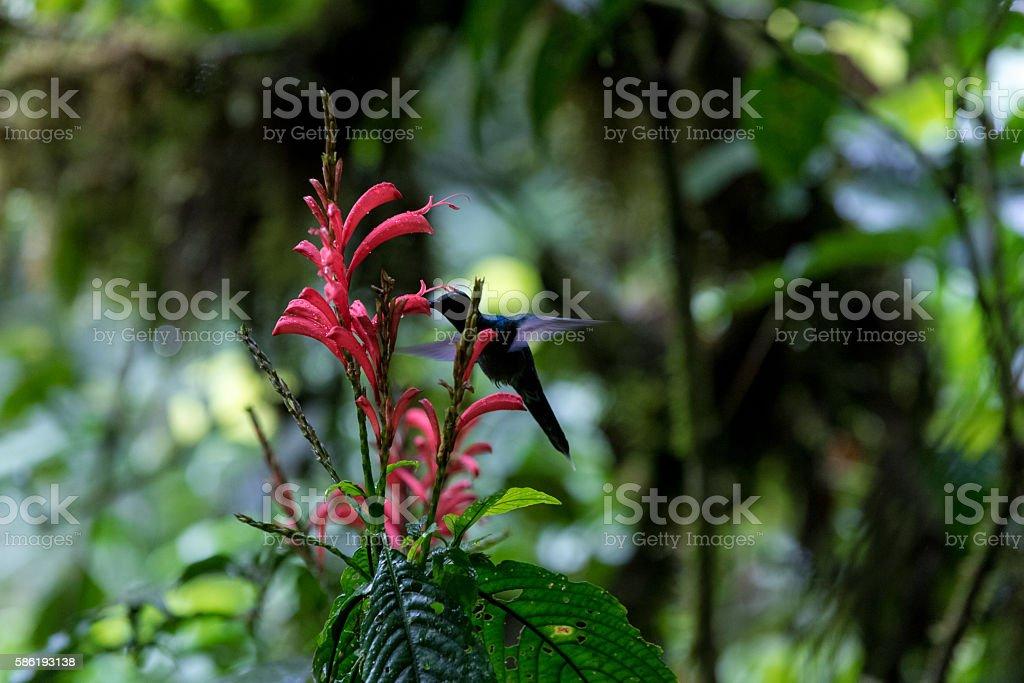 Cloud Rainforest of Monteverde in Costa Rica stock photo