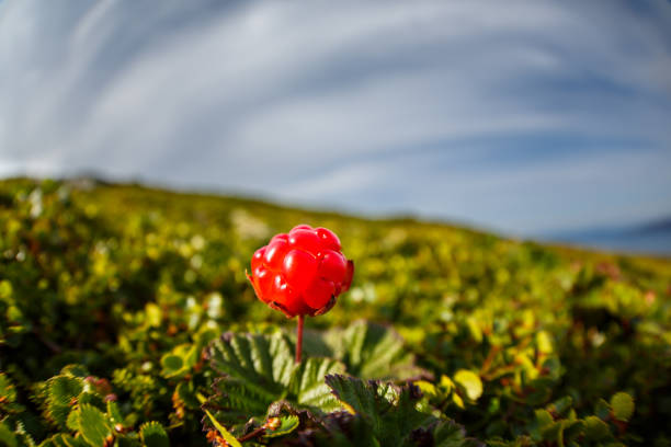 Cloudberry and sky. stock photo