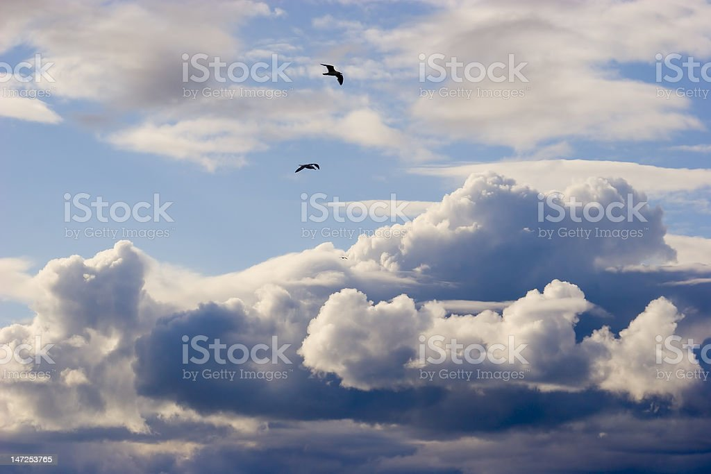 Clouds and flying birds royalty-free stock photo