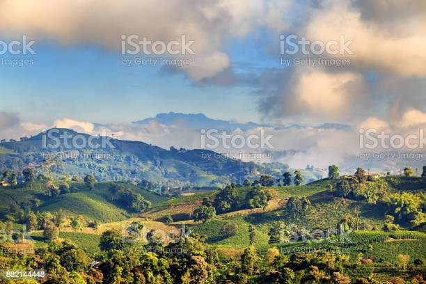 Photo of Clouds clear in the early morning on Coffee Plantation