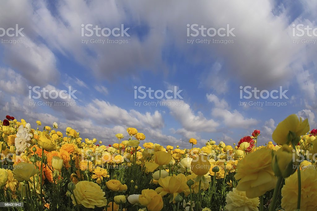 clouds flying above the field royalty-free stock photo