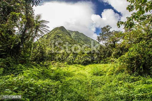 Rain in a tropical forest of the Caribbean