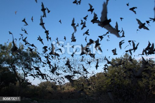 Over a million Mexican free-tailed bats stream into the evening sky for a night of consuming insects in the Texas Hill Country west of Austin.