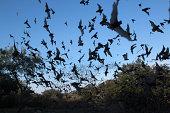 雲のメキシコ無料のテール bats テキサス州