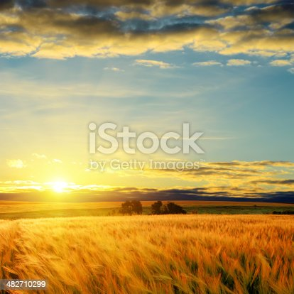 istock clouds on sunset over field with barley 482710299