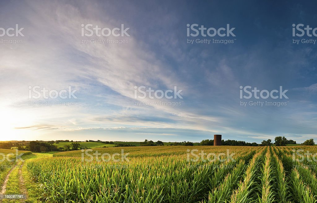 Clouds over Corn stock photo