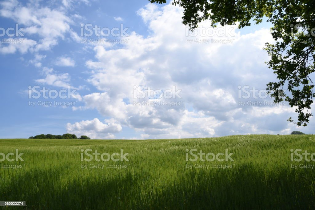 Wolken über Kornfeld royalty-free stock photo