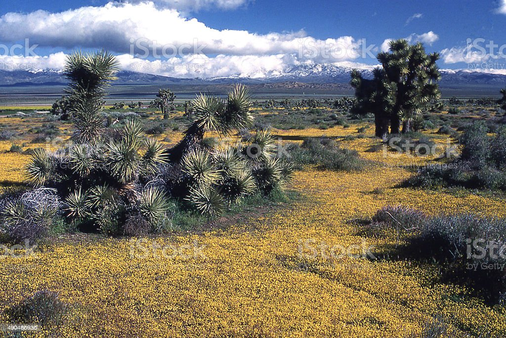 clouds over mountains spring flowers Mojave Desert Lancaster California stock photo