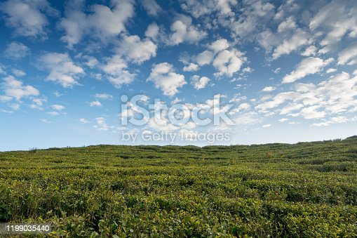 Scenic landscape of clouds over tea garden