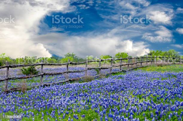 Clouds over texas bluebonnets picture id1126947067?b=1&k=6&m=1126947067&s=612x612&h=0pygf5ngzmjcr4uxb1yoycz gqqkudyb3tll2a7vgq0=