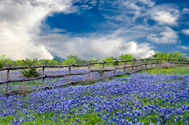 clouds over Texas bluebonnets The state flower of Texas is interrupted by a cedar post and barbed wire fence under tranquil clouds in a bright springtime day san antonio texas stock pictures, royalty-free photos & images
