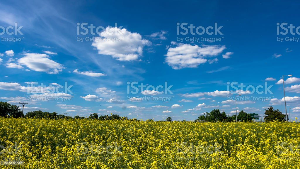 Clouds over the field of oilseed rape stock photo