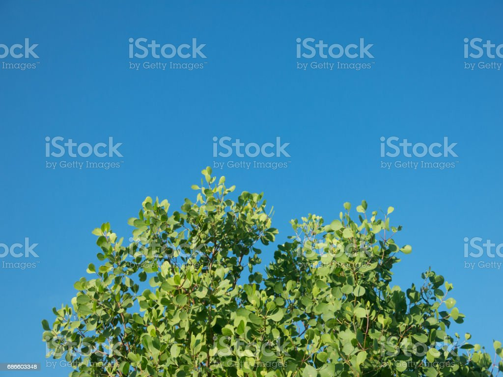 Clouds Typologies: Clear Weather Blue Summer Sky above Treetops. royalty-free stock photo