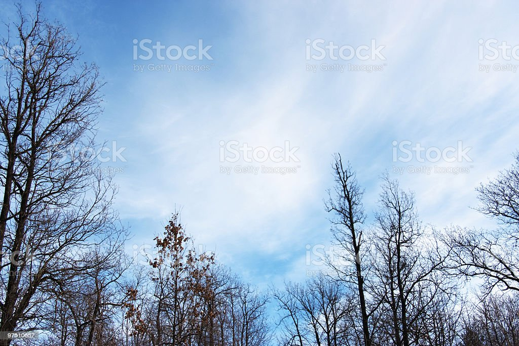 Cloudscape in forest royalty-free stock photo