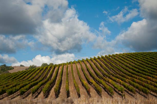 wolkengebilde über die weinberge von sonoma county, kalifornien - robert weinberg stock-fotos und bilder