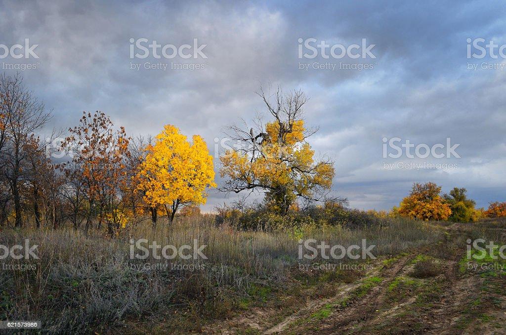 Nuageux paysage d'automne photo libre de droits