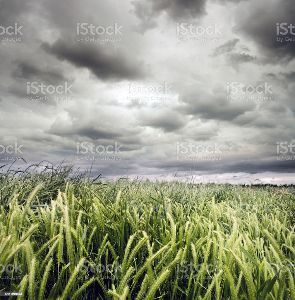 Cloudy Day in the Country royalty-free stock photo
