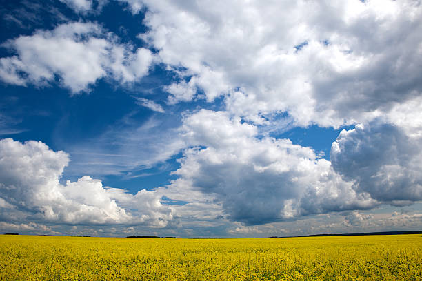 Cloudy landscape 2 stock photo