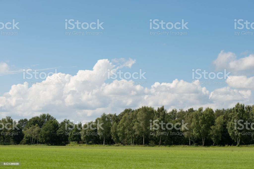 Cloudy skies above extensive lawns with a forest stock photo