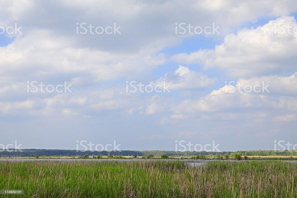 Cloudy sky over marsh wildlife area royalty-free stock photo