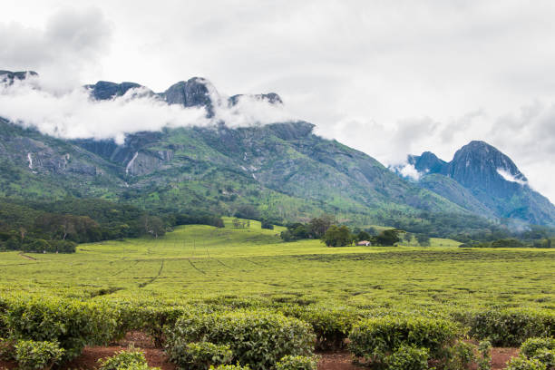 Cloudy sky with Mount Mulanje and tea plantations stock photo