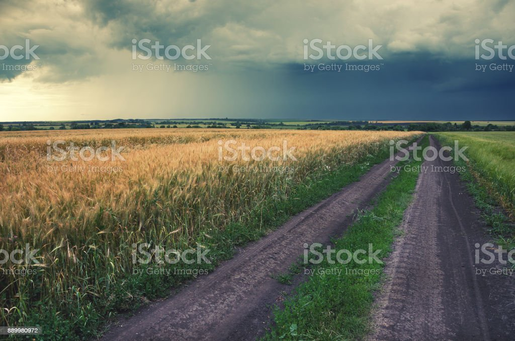 Cloudy summer landscape with ground countryside road.Field of ripe wheat.Dark storm clouds in sky. stock photo