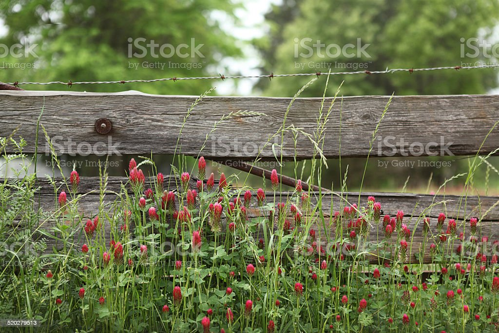 Clover and Fence stock photo