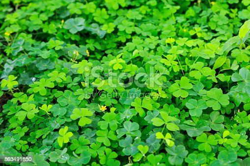 Clover and little yellow flower stock photo more pictures of clover and little yellow flower stock photo more pictures of beauty istock mightylinksfo