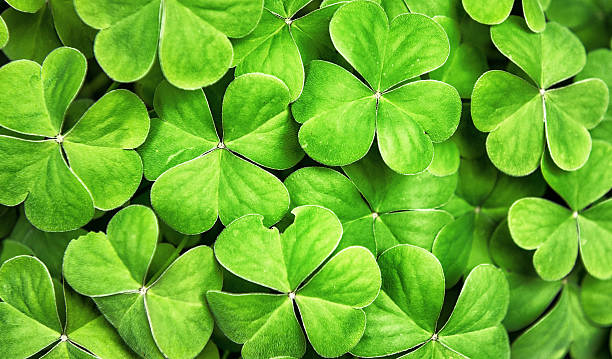 clover background for st. patrick day - st patricks days stock photos and pictures