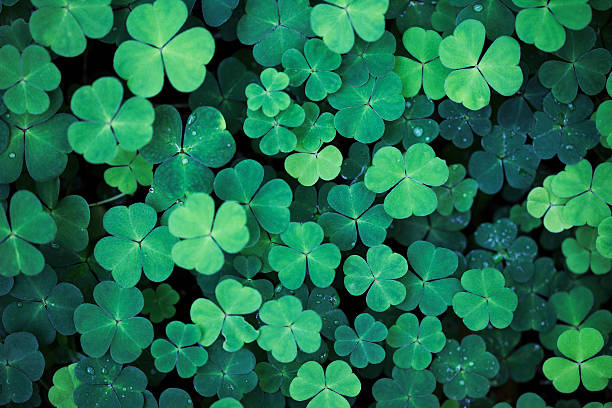 clover field background - st patricks day stock photos and pictures