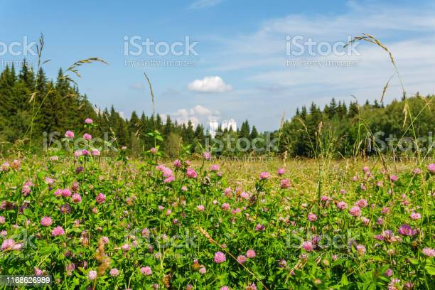 Photo of clover field, forest and city in the distance
