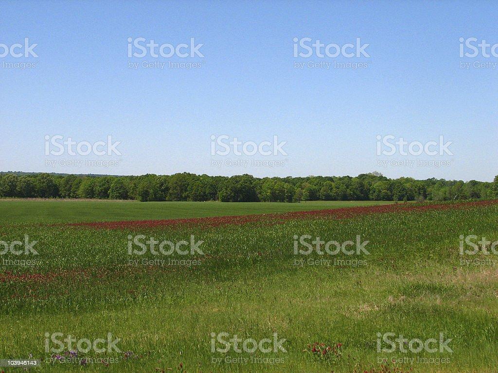clover field stock photo