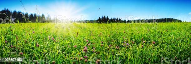 Clover flowers field in sunset picture id1097307450?b=1&k=6&m=1097307450&s=612x612&h=rye47iayexbhf8  0pch5amlyjqnlu 0nydaxmknf u=
