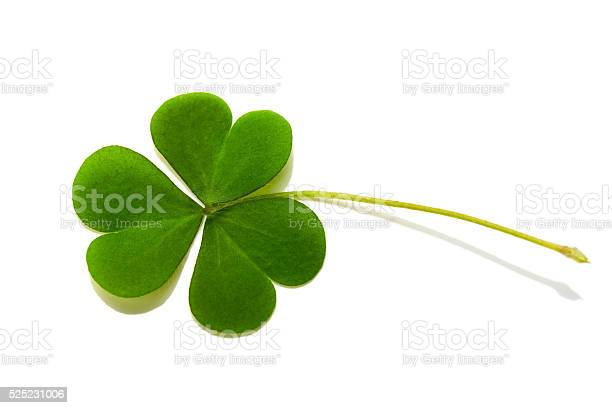 Clover isolated on white background picture id525231006?b=1&k=6&m=525231006&s=612x612&h=s x4jsaerjdddl8uuuulk0rebxgkjqhyienyo mln8y=