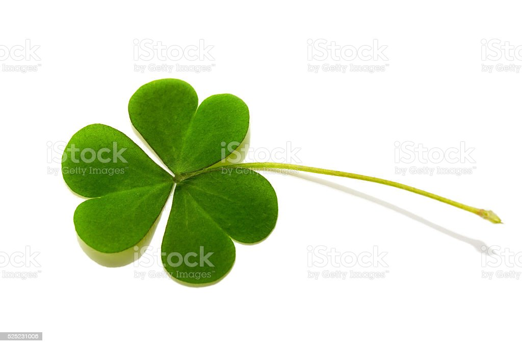 Clover isolated On white background stock photo