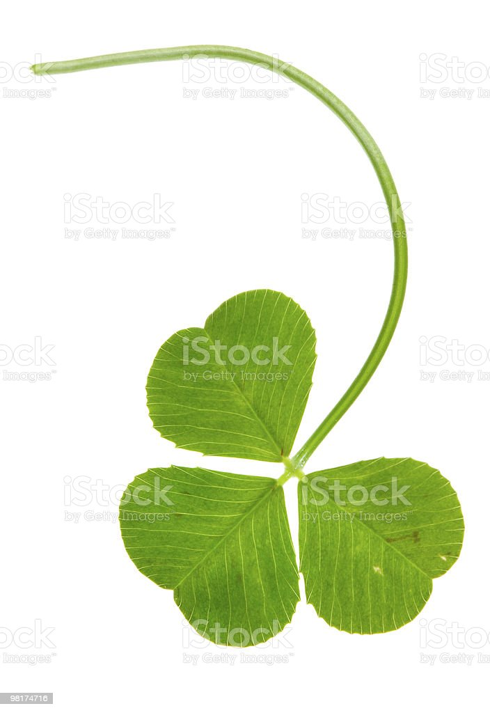 clover isolated royalty-free stock photo