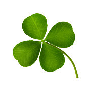 Clover leaf four-leaf isolated on white background close-up.