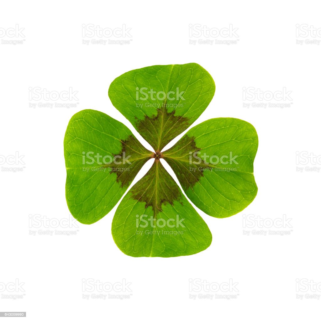 Clover leaf - happiness stock photo