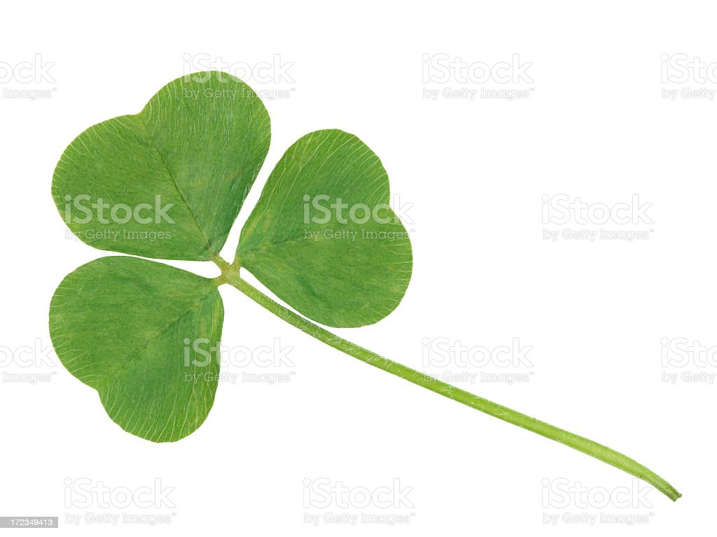 Clover on white background royalty-free stock photo