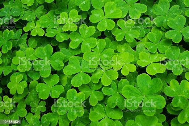 Clover picture id104831804?b=1&k=6&m=104831804&s=612x612&h=edr8emo9lzdoe7tlbtfvfjlenwhnbvpm13ebegsjbua=
