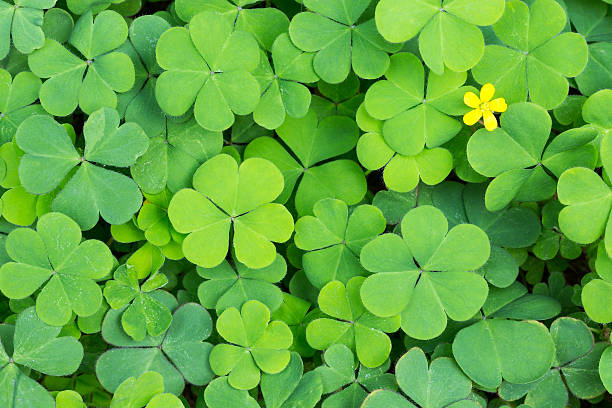 Clover Clover month stock pictures, royalty-free photos & images